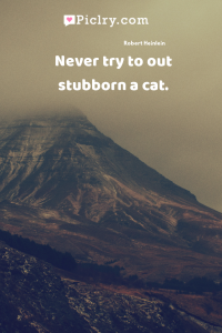 Never try to out stubborn a cat. quote photo
