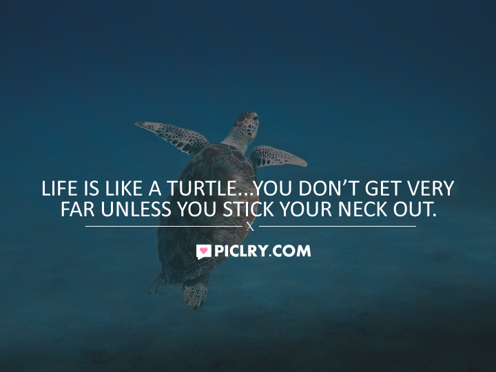 Life is like turtle quote pic