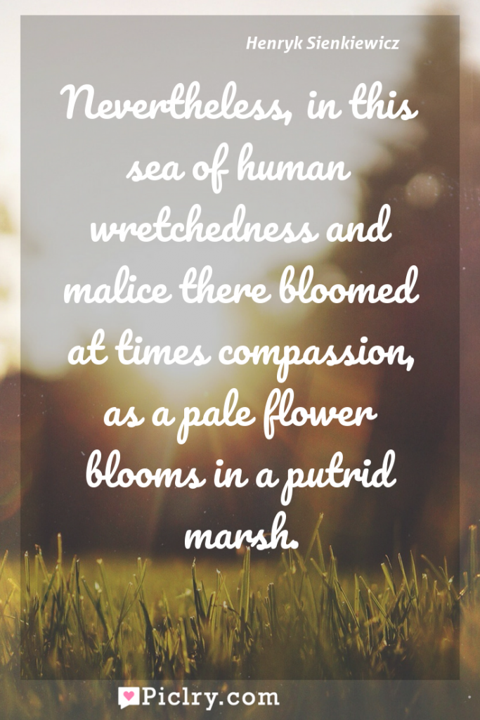 Meaning of Nevertheless, in this sea of human wretchedness and malice there bloomed at times compassion, as a pale flower blooms in a putrid marsh. - Henryk Sienkiewicz quote photo - full hd4k quote wallpaper - Wall art and poster