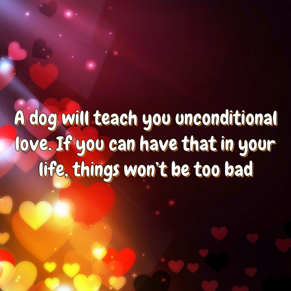 A dog will teach you unconditional love. If you can have that in your life, things won't be too bad