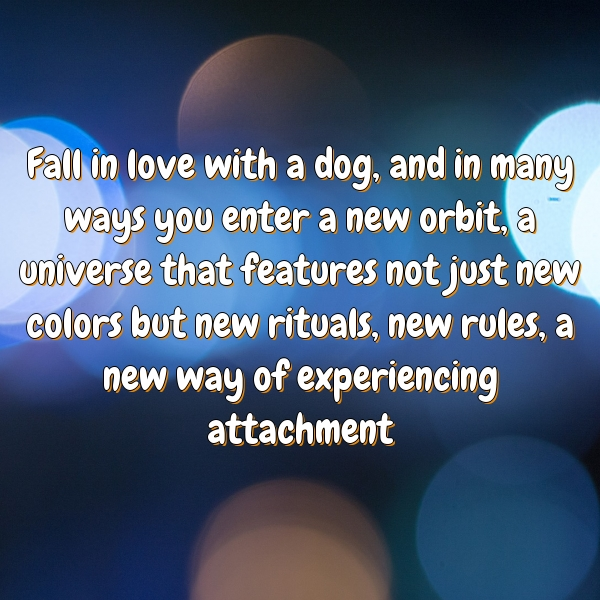 Fall in love with a dog, and in many ways you enter a new orbit, a universe that features not just new colors but new rituals, new rules, a new way of experiencing attachment