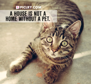 house not home without pet