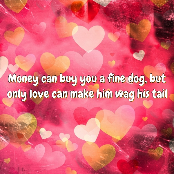 Money can buy you a fine dog, but only love can make him wag his tail.