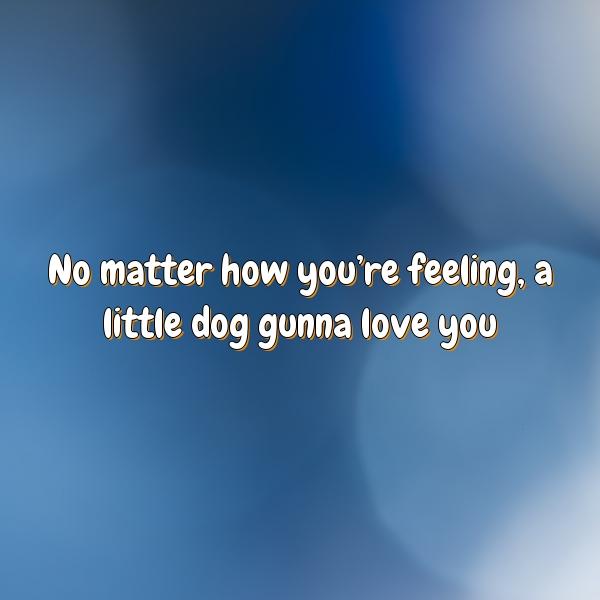 No matter how you're feeling, a little dog gunna love you