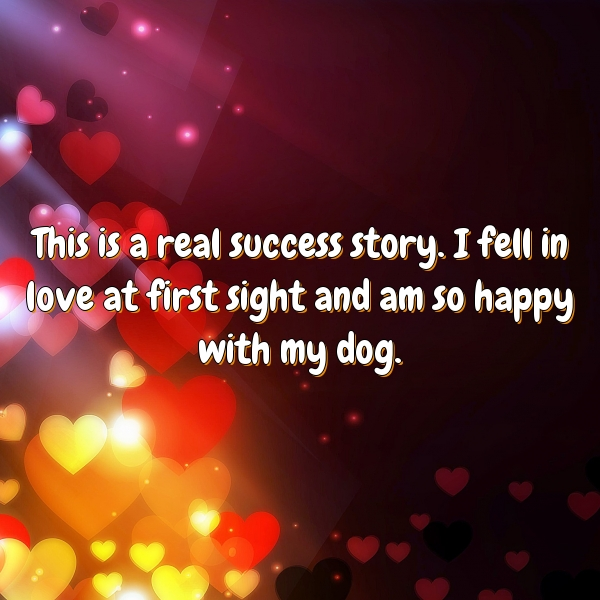 This is a real success story. I fell in love at first sight and am so happy with my dog.