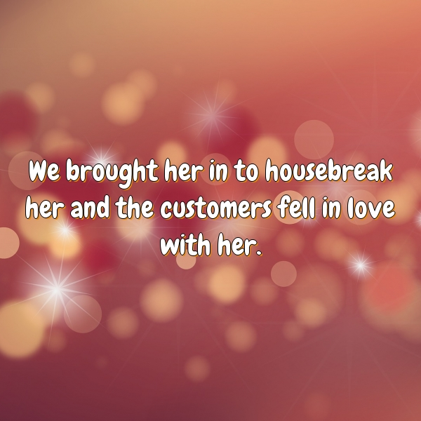 We brought her in to housebreak her and the customers fell in love with her.